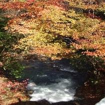 施設周辺/夕滝の紅葉