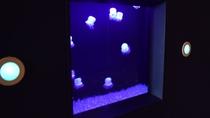 【その他】客室フロアにはクラゲが泳いでいます…