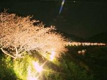 夜桜の幻想的なライトアップ