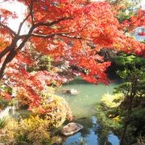 *1階和室8畳一例/鮮やかに色付く木々が美しい紅葉の季節。お部屋からこの眺めをお楽しみ下さい。