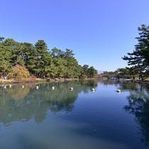 """*敷島公園/園内にある""""ボート池""""ではスワンボートも楽しめます。カップルやファミリーにおすすめ!"""