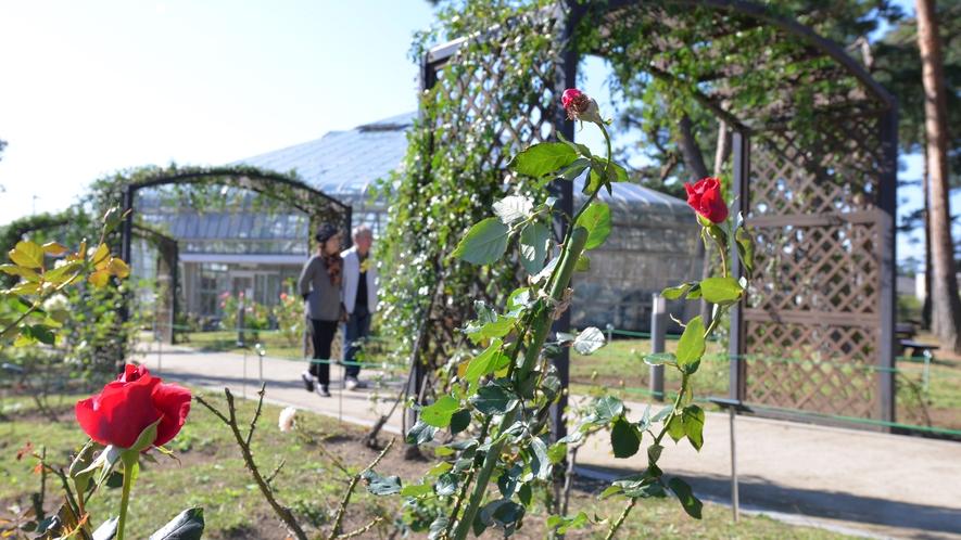 """*敷島公園/600種7,000本のバラや四季を彩る花木をご覧いただける""""バラ園""""。毎年春と秋に""""バラ"""