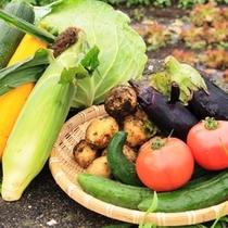 野菜収穫体験のイメージです