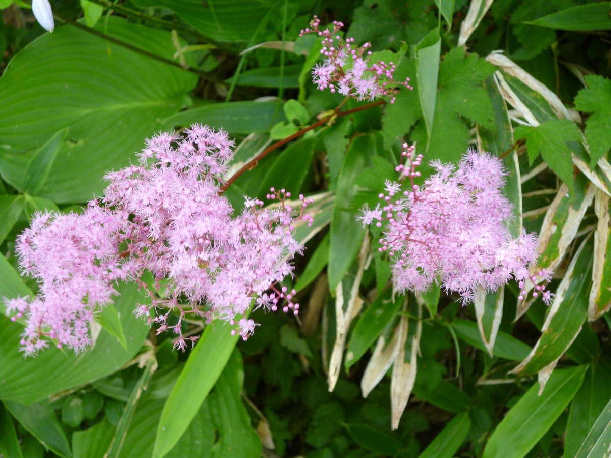 金時山に咲く花