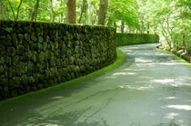 苔むす別荘地への道