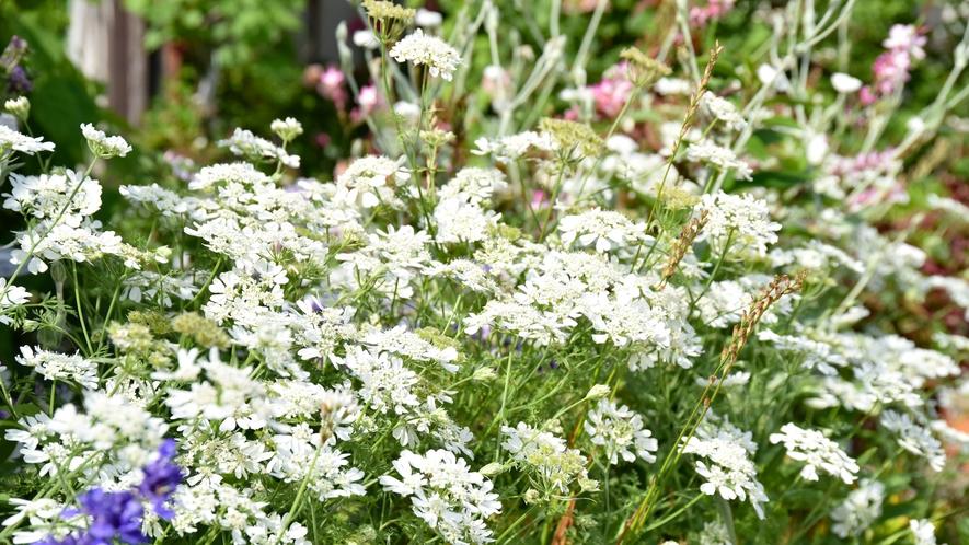 *花壇 四季折々のお花でお客様をお迎えします。