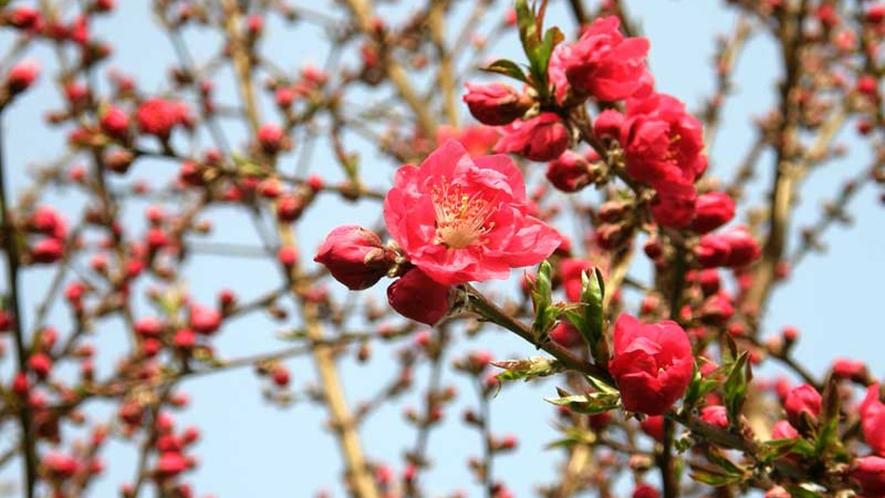 *お庭の花