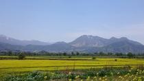 R117【道の駅・・・千曲川】 菜の花畑遠くは残雪の高社山