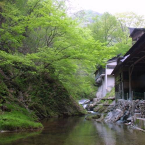 岩風呂外観風景(新緑)