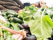 地元岡山で採れた新鮮な野菜を使用。
