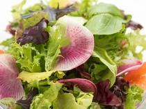 地野菜のサラダは食べ放題です。