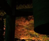 温泉寺紅葉ライトアップ2