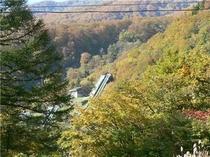 10月中旬赤倉シャンツェ付近の紅葉
