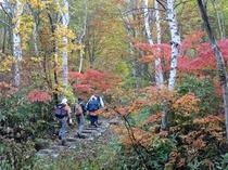 笹ヶ峰火打山登山口近くの紅葉
