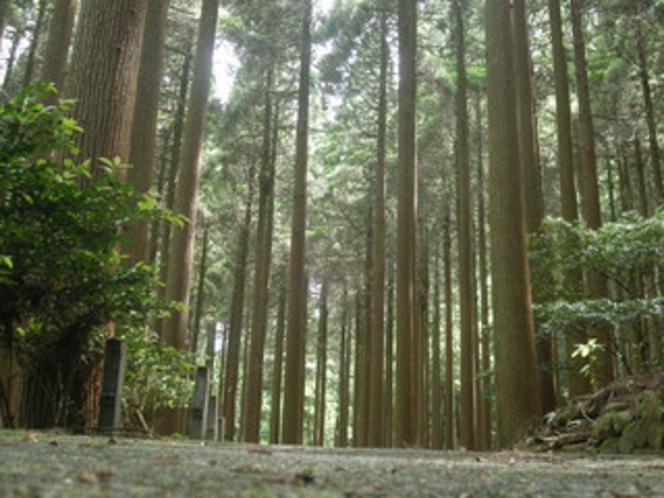 百年杉庭園に通る遊歩道