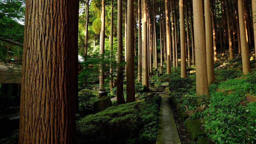 百年杉庭園(ワイド)