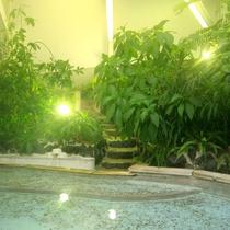 ジャングル風呂3
