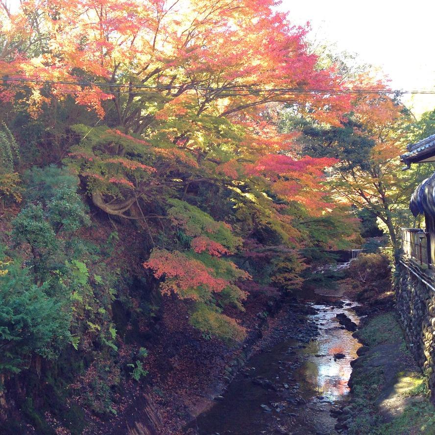 二ッ島川と紅葉