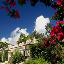 【フサキガーデン】ガーデンを散歩すると、色鮮やかな亜熱帯の植物達に出会えます