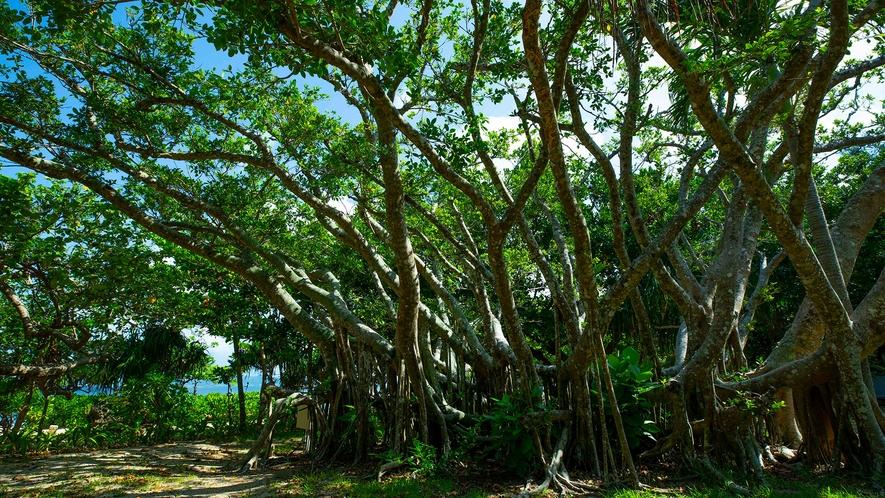 【フサキガーデン】南国独特の木々の下で、癒しの時間を体験ください