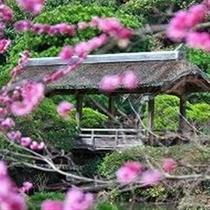 日本庭園の中心に位置している橋「筑紫橋」