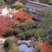 紅葉に彩られた秋の日本庭園