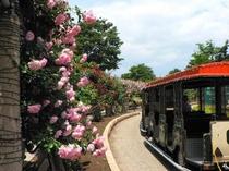 ハイジの村のバラ