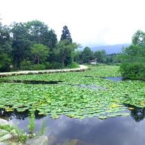 *【いもり池】妙高高原池の平温泉にある周囲500mほどの池です。