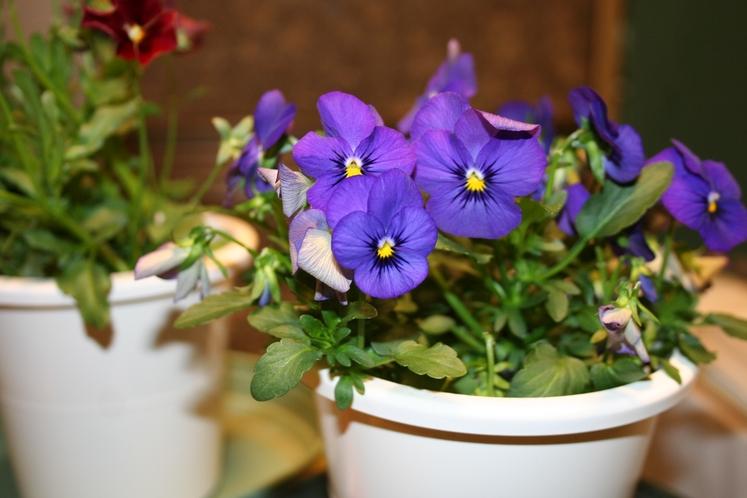 お花の小鉢プレゼント(種類はおまかせ)