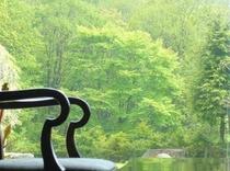 くつろぎのロビーから森を眺める