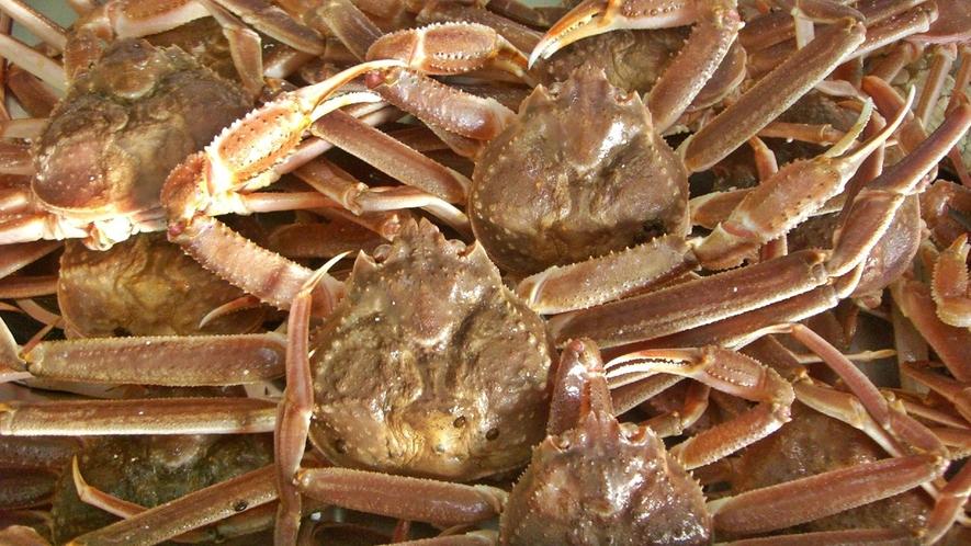 元魚屋の主人が厳選した蟹です!