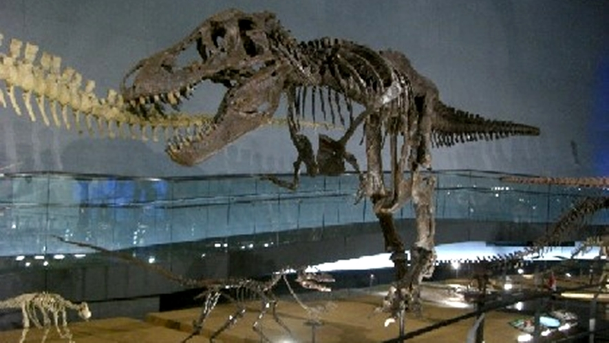*■恐竜博物館■