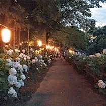 あじさい公園 夜間ライトアップ