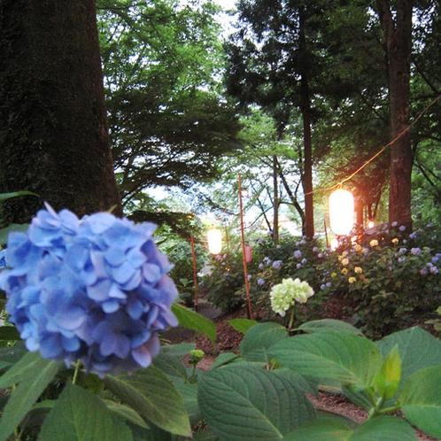 小野池あじさい公園 夜間ライトアップ