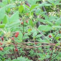 *大沼の風景/当館より徒歩7分の大沼では、季節ごとに様々な植物がご覧になれます。