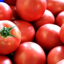 ぎゅーっと味の詰まった採れたてトマト!
