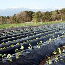 自社農園で育てられたお野菜をお客様にご提供しています。