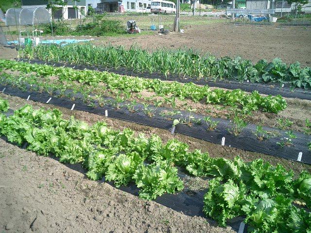 季節の野菜I