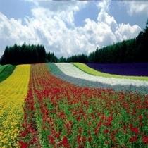 ◆ファーム富田◆ノロッコ号で旭川から約80分。素敵な花畑が広がります