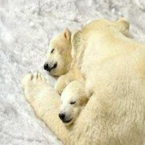 ◆旭山動物園の人気者シリーズ③◆