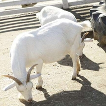 マザー牧場では動物とのふれあいも出来ます