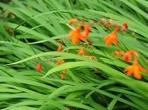 お庭のお花。毎年きれいに咲きます