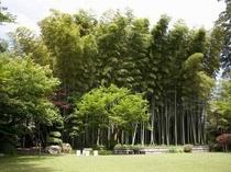 当館のお庭。100年越の竹林です!お庭は散策できます。