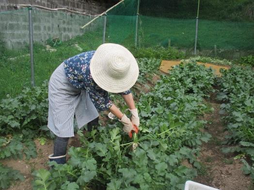 地産地消☆自家畑の新鮮野菜でパワーを!季節限定会席膳』