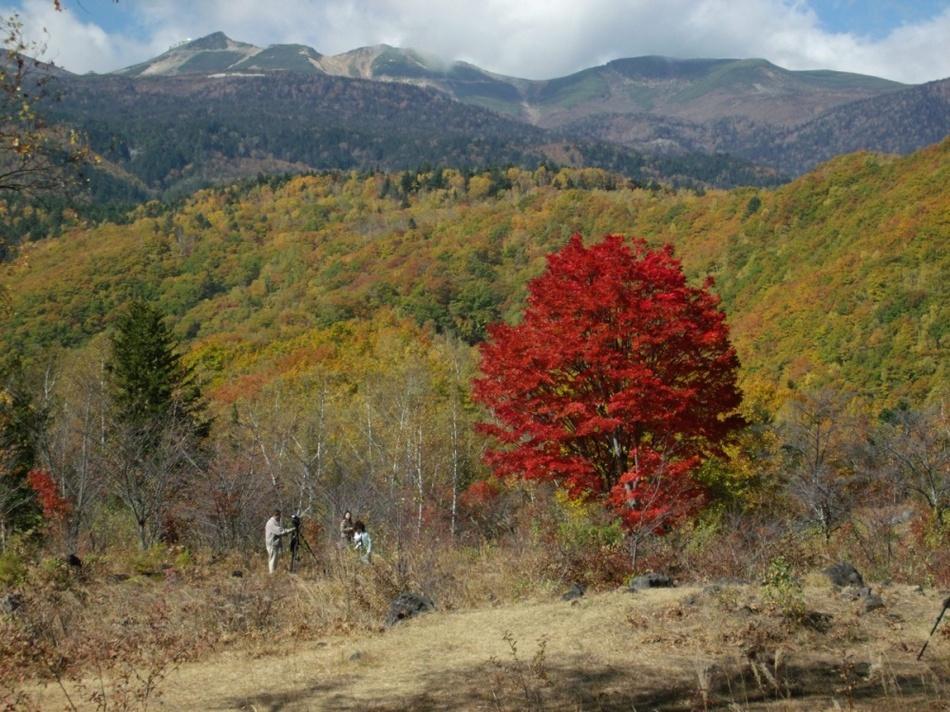 一の瀬紅葉全景