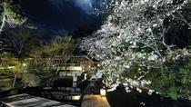 まつさきの夜桜