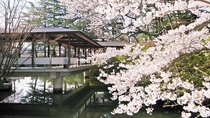 まつさきの桜