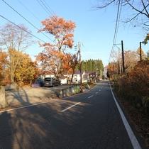 *当館目の前の通り。木々が秋の装いを見せています。