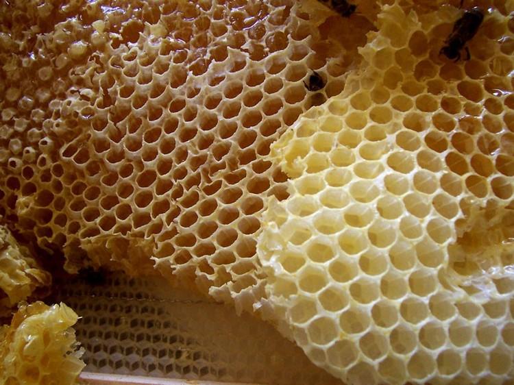 蜂蜜がいっぱいの巣