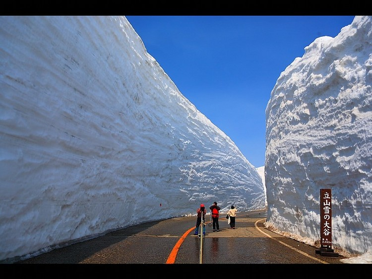 立山黒部アルペンルート【高さ16mの雪道】